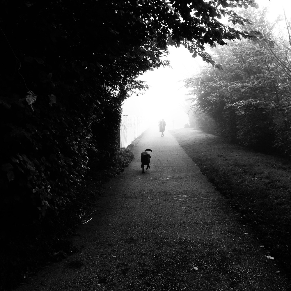provoke - dog walker