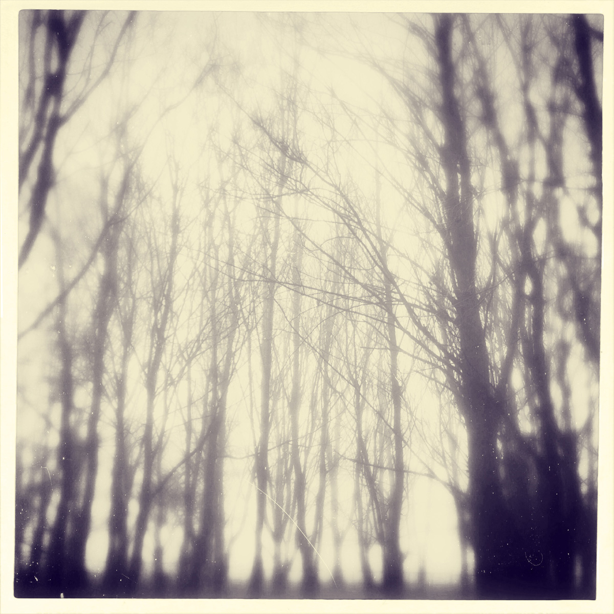 iphoneography - foggy trees 2